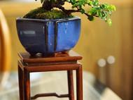 手工组合盆栽 子持莲华 袖珍树桩盆景