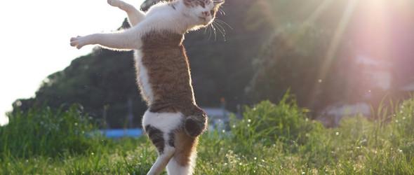 """瞧!那些跳着""""街舞""""的流浪猫们 -日本摄影师 Hiroyuki Hisakata 镜头下的喵星人"""