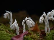 森林里的小精灵:纸艺球果假沙晶兰