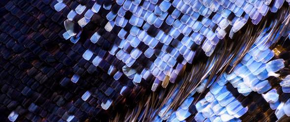 Chris Perani | 微距摄影下的蝴蝶翅膀像星空一样璀璨
