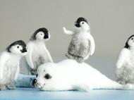 《极地村落》小企鹅和小海豹 有公开教程欢迎围观
