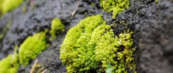 你了解药用苔藓植物吗?