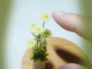迷你小野菊