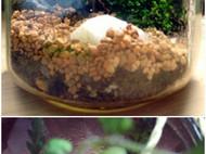 [野趣盆栽]野外苔藓和蕨类制作盆景台历