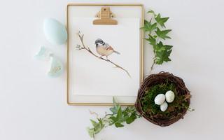 免费模板下载 | 5种免费的春天花鸟模板,可以打印成家居装饰画或装饰文具