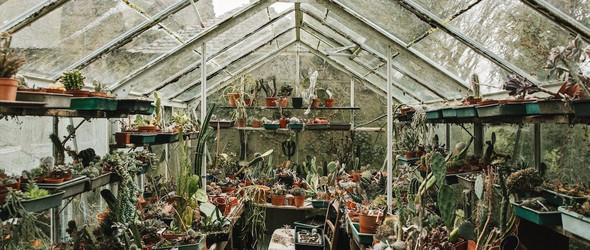 绿植之夏 | Haarkon的温室丛林冒险