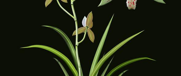 从整体到局部的植物科学插图 | Benjamin Cardenas Valderrama