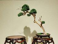 明式瘿木面仿竹节鼓型花几 盆景底座 红木家具 榫卯 新中式