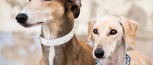 Dog Milk:可爱的狗狗与狗狗配饰