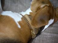 「 气息 」KOAN / 宠物/  南美macrame绳编 狗狗黄铜手工刻字编织定制项圈