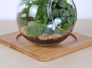 依雯然 苔藓微景观 生态瓶 创意礼物 办公室摆件 夏末