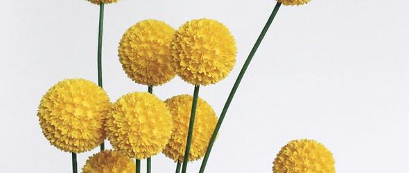 精确的纸雕植物和花朵 | Mabel Low