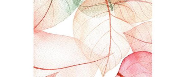 清新多彩的手绘花朵 | @popo_owl