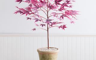 纸艺DIY教程:唯美的日本红枫树盆栽(附模板下载)