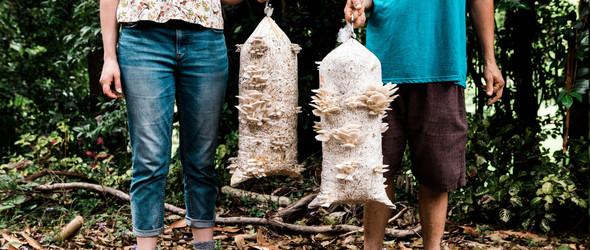 废弃棚子里的有机蘑菇 | Mountaintop Mushrooms
