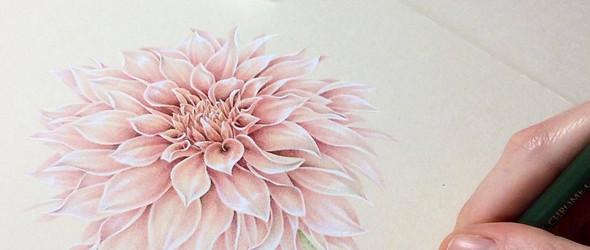 法国插画师 Irene Laschi 的大丽花手绘过程(彩铅+水粉)