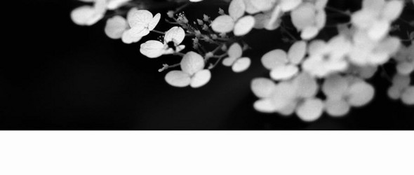 黑白花卉 | 韩国摄影师김은희(Stella)的胶片摄影