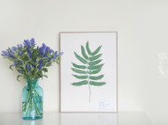 纸艺蕨类和蓝花楹叶