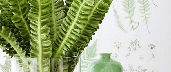 园艺派对:蕨叶物语——Fern Centerpiece