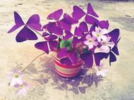 紫萱花叶书签