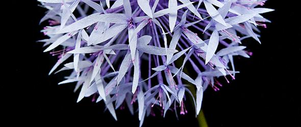 皱纹纸diy教程 - 梦幻紫色花束DIY制作教程