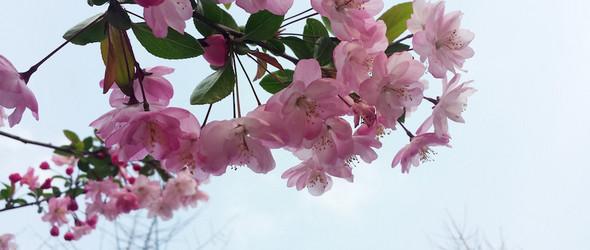 春日 花开