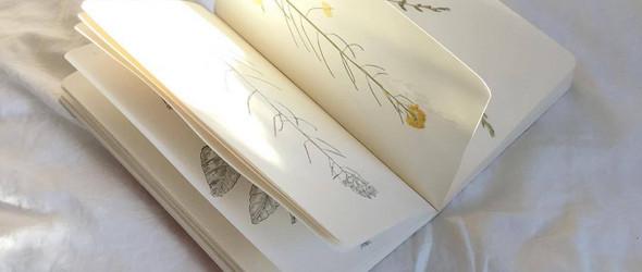 加拿大女生 leo.mortem 的植物标本和手绘植物