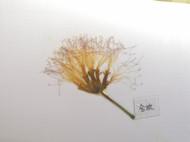 树叶,花朵标本书签