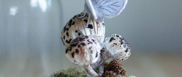 Emily Yeadon | 精美的刺绣蝴蝶和飞蛾