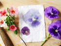 留住春天的色彩 - 自然花卉染色实验和diy教程