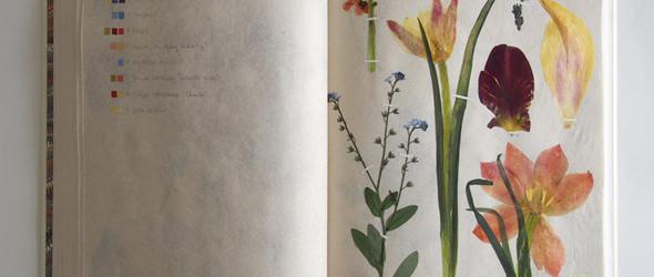 一本独特的植物标本:左边是色卡,右边是押花