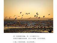 海鸥。原创手工紫光檀黑檀木嵌银质项链毛衣链 生日礼物 男女