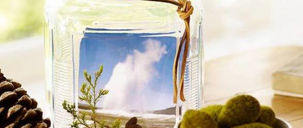 时间胶囊——Nature's Time Capsule