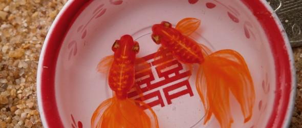 金鱼的厨房 凡尼亨3D树脂画鱼