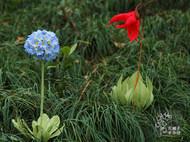 纸艺高原花卉