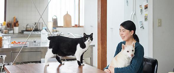 二只猫,一只狗,还有美食 | 日本美食家 / 作家桑原奈津子的生活