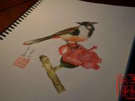 彩铅工笔花鸟