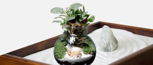 苔藓微景观适合放置的场所