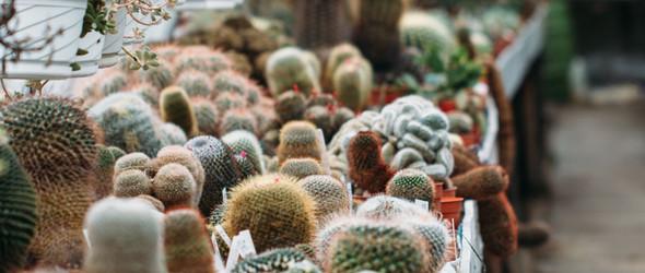 多肉植物控的圣地,英国Abbey Brook Cactus Nursery苗圃